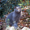 11/18/13 - The Gray Panther?