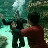 01/19/15 - NC Aquarium at Fort Fisher - Johnny and the Diver
