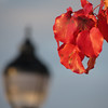 11/22/13 - Crimson and the Lamp