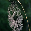 Spiderwebs :