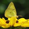 07/26/15 - Yellow on Yellow Take 2