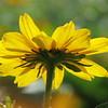 07/25/15 - Flower in the Light