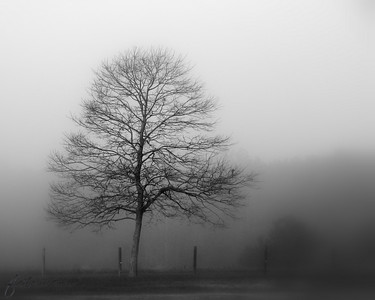 11/23/10 - Tree in the Fog  I have been watching and studying this tree for a couple of years now.  Whenever there is fog, it seems to stand out from the backdrop...a solitary, lonely figure.  I finally made up  my mind yesterday to figure out where to park the car to get out to take a picture...not a small feat.  I do try to stay safe, but this location is more precarious than some.  Most days I am joyful as I spend time with the kids.  My life is full of laughter and color; it's vibrant and full of life like many of my pictures.  But some days at least deep inside it is like this too.  I guess a bit of that side is slipping through today.  I stopped to think about my mother for a few minutes when I took this.  She was involved in a horrible traffic accident with a tractor trailer on a foggy morning in November just before Thanksgiving in 1985.  For me, the fog will always be more than just the fog.  Back to bright and cheery tomorrow I promise...  Thanks for your comments on Johnny and the Jon boat.  It was as serene out there as you thought.  Little wind, warm sun on our skin, very few boats out on the lake...a calming hour without the chaos of life.  HAGD, Maryann